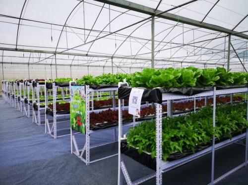 """中科量农""""植物工厂""""用蔬食管理健康生活"""